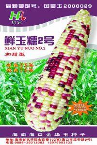 供应加甜型玉米种子--鲜玉糯2号(国审品种)