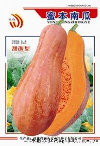 供应蜜本南瓜—南瓜种子