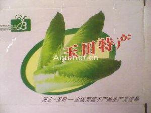 玉田包尖大白菜