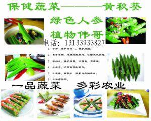 yabo80绿色人参黄秋葵种子