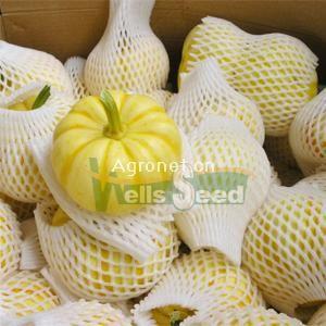供应桔瓜—南瓜种子