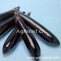 供应黑船茄子—茄子种子