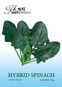 供应凡斯特—进口菠菜种子