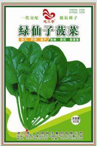 供应绿仙子—菠菜种子