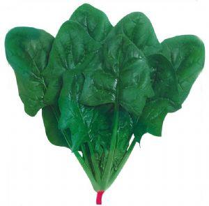 供应优质菠菜
