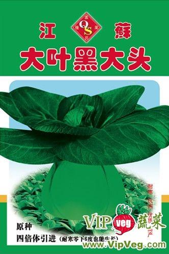 浙江金华磐安_供应大叶黑大头-青梗菜种子图片