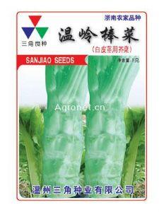 供应温岭棒菜—莴苣种子