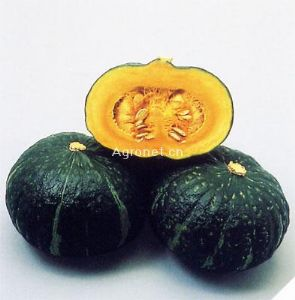 供应栗辉——南瓜种子