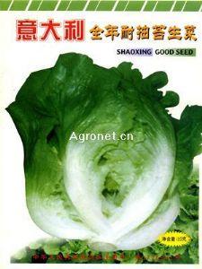 供应意大利全年耐抽苔生菜—生菜种子