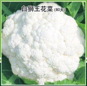 供应白狮王80天花菜—花椰菜种子
