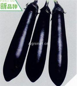 长龙35——茄子种子