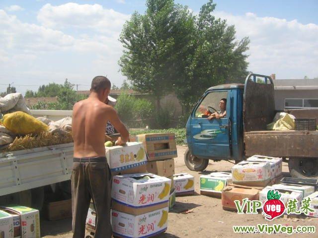 蔬菜网首页 中国西瓜网 西瓜供应信息 > 供应西瓜   忻州市曹张乡西瓜