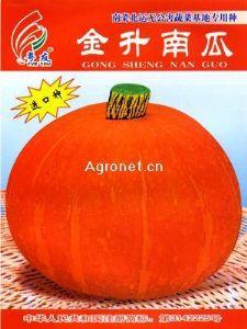 供应金升—南瓜种子