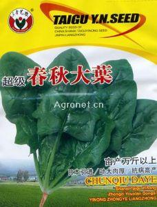 供应超级春秋大叶-菠菜种子