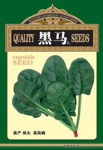 供应黑马F1—菠菜种子