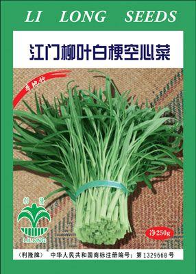 广东江门蓬江_江门柳叶白梗空心菜——空心菜种子图片