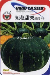 供应短蔓甜栗南瓜F1—南瓜种子