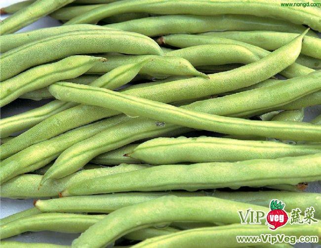 菜豆供应信息 > 供应优质豆角  联系我时,请说是在《vip蔬菜网》上
