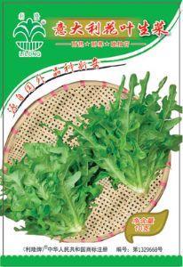 供应意大利花叶生菜—生菜类种子