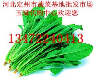供应大叶菠菜