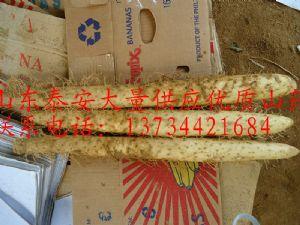 供应优质山药,莴苣,菠菜等