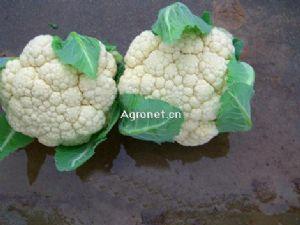 供应白菜花
