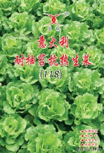 供应意大利耐抽苔抗热生菜—莴苣种子