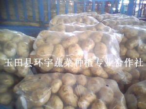 供應新鮮馬鈴薯