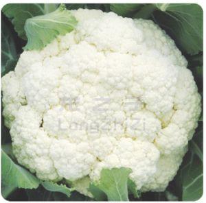供应祥云—花椰菜种子