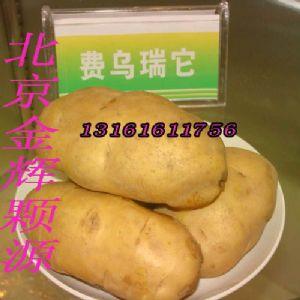 供应费乌瑞它荷兰薯早熟马铃薯