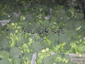 供应寿光套菜、礼品菜——西兰花