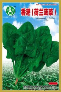 供应香港(荷兰菠菜)—菠菜种子