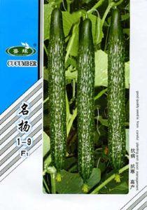 供应名扬1—9—黄瓜种子