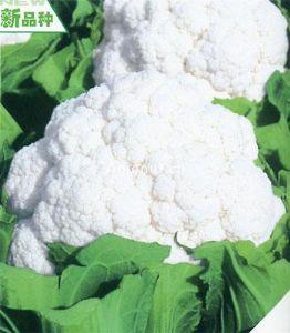 供应名月55——花椰菜种子