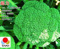 供应超力--花菜种子