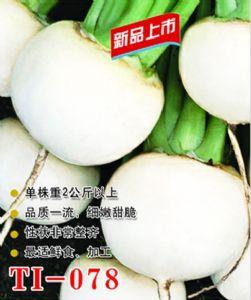 供应TI-078--萝卜种子
