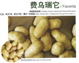 供应费乌瑞它—马铃薯种子