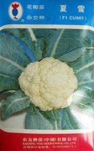 供应夏雪—花椰菜种子