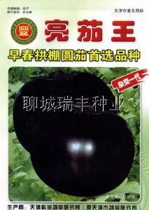 供应亮茄王—茄子种子