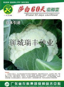 供应花椰菜种子—花椰菜种子