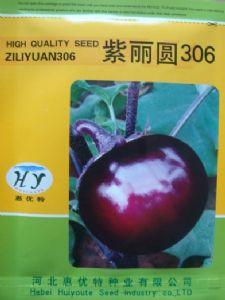 供应紫丽圆306—茄子种子