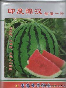 供应印度懒汉(甜蜜一号)—西瓜种子