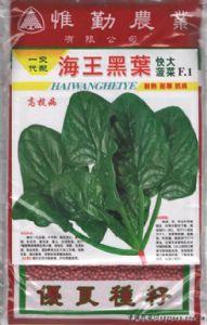 供应海王黑叶—菠菜种子