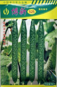 供应博新525—黄瓜种子