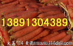 供应陕西红萝卜