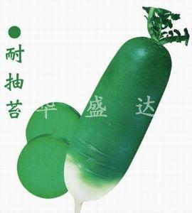 供应青岛特青萝卜—萝卜种子