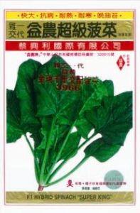 供应金瑞千里3966—菠菜种子