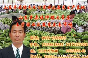 供应西葫芦、茄子、无丝豆、黄瓜