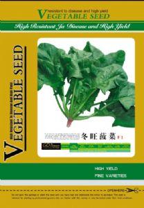 供应冬旺—菠菜种子