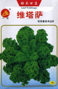 特菜种子——维塔菜